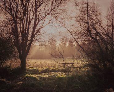 Winter scene by Nick Kane on Unsplash