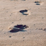 The Small Steps Blog