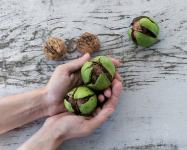 Photo of person holding chestnuts by NordWood Themes on Unsplash